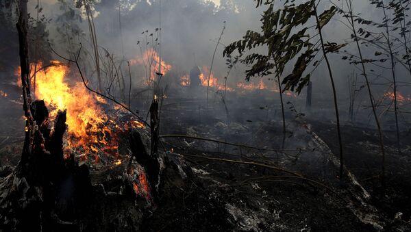 Incendi in Amazzonia - Sputnik Italia