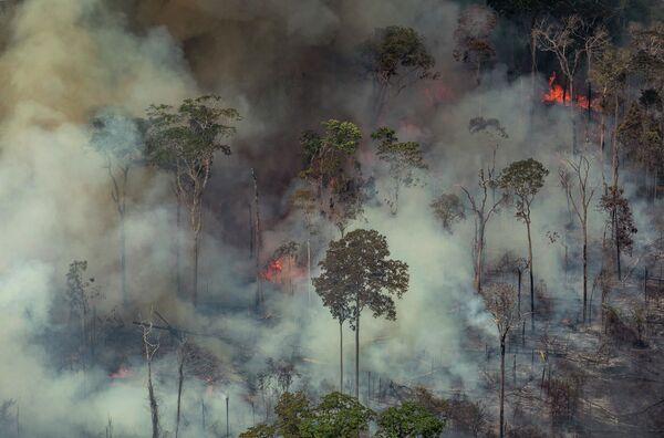 Le foreste dell'Amazzonia continuano a bruciare. - Sputnik Italia