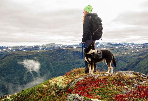 Norvegia è l'unico paese non africano nel top 5 dei paesi che si occupano della conservazione di grandi animali di terra. - Sputnik Italia