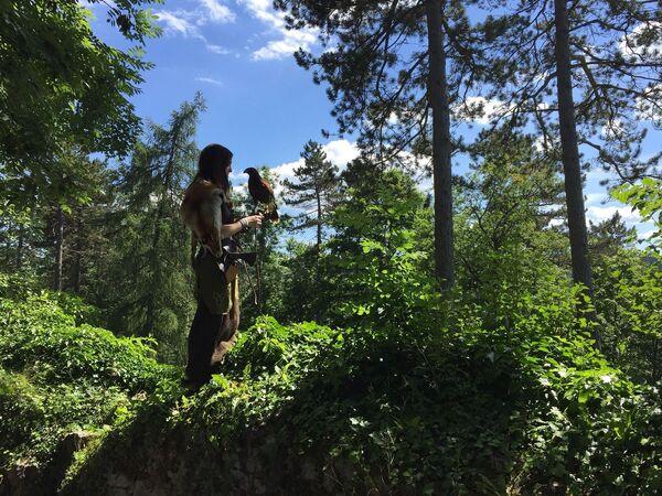 La foresta bavarese, la Foresta Nera, lo Harz... sono famosi boschi tedeschi. - Sputnik Italia