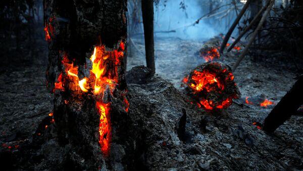 Горящие леса Амазонии, Бразилия - Sputnik Italia