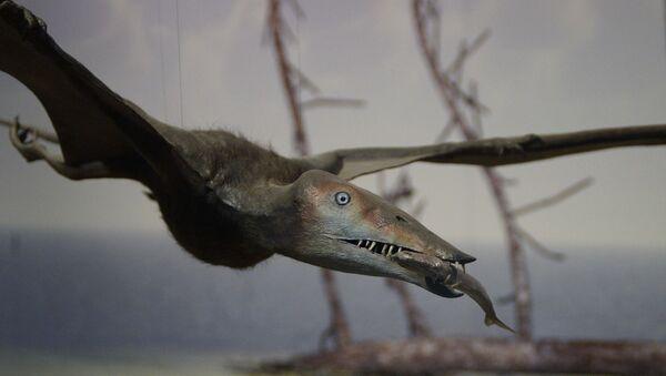 Pterosauro - Sputnik Italia