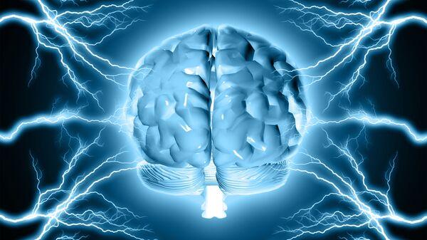 Un modello del cervello umano - Sputnik Italia