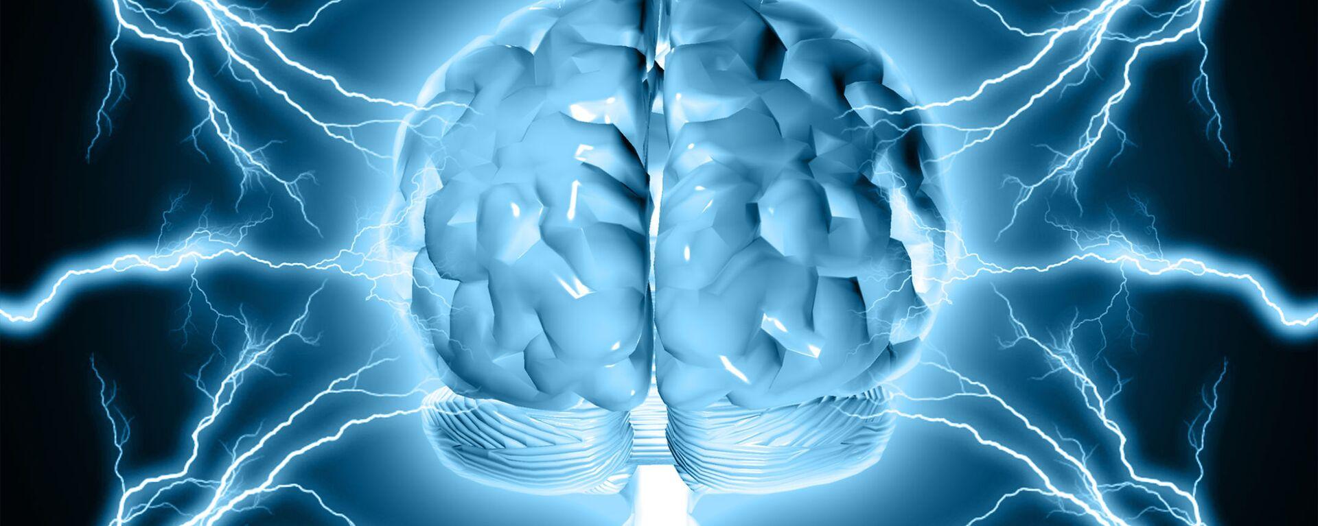 Un modello del cervello umano - Sputnik Italia, 1920, 21.12.2020