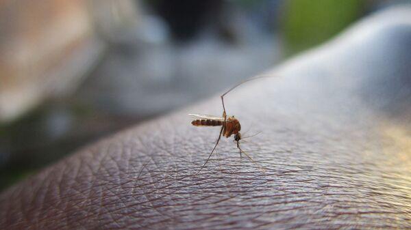 Una zanzara - Sputnik Italia