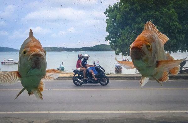 Foto della spiaggia di Rawai a Phuket attraverso il vetro di un acquario con pesci. - Sputnik Italia