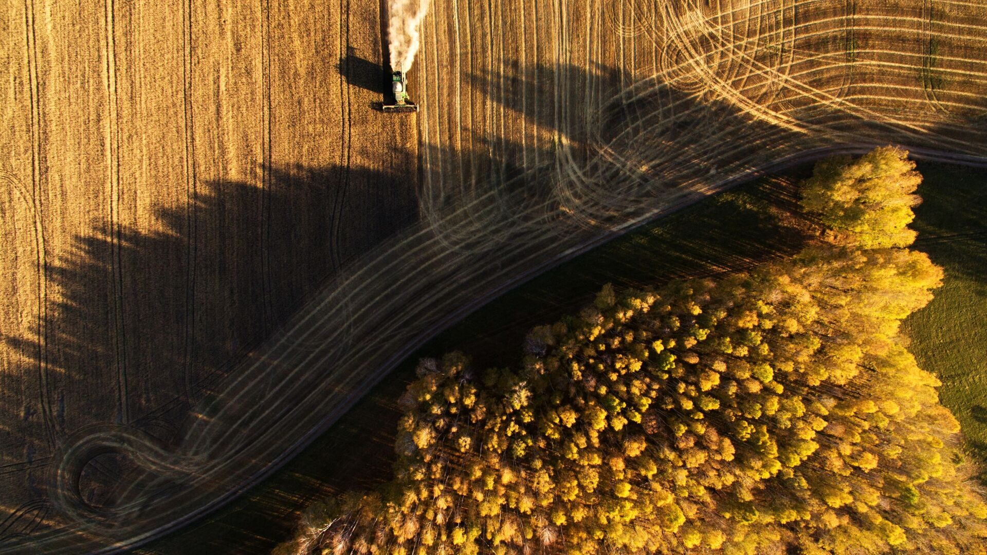 Raccolta del grano nell'Oblast di Novosibirsk, in Russia. - Sputnik Italia, 1920, 07.10.2021