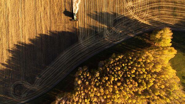 Raccolta del grano nell'Oblast di Novosibirsk, in Russia. - Sputnik Italia