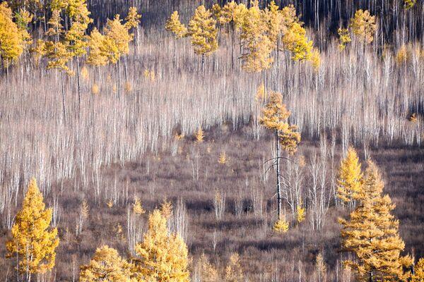 Bosco autunnale di Titovskaya Sopka nella Siberia meridionale, in Russia. - Sputnik Italia