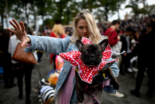 Un cane vestito da Demogorgon all'annuale Halloween Dog Parade a New York - Sputnik Italia