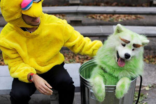 Mark Belio, vestito come il Big Bird del programma televisivo statunitense per bambini 'Sesame Street', con Biff the Samoyed, vestito da Oscar the Grouch, all'annuale Halloween Dog Parade di New York - Sputnik Italia