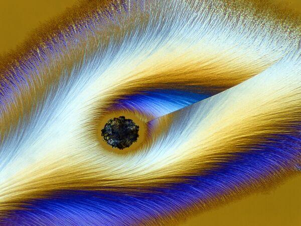 La foto 'Vitamina C' del fotografo tedesco Karl Deckart che ha ottenuto il 17° posto al concorso fotografico Nikon Small World-2019 - Sputnik Italia
