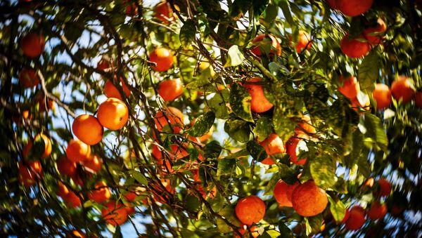 Arancio - Sputnik Italia