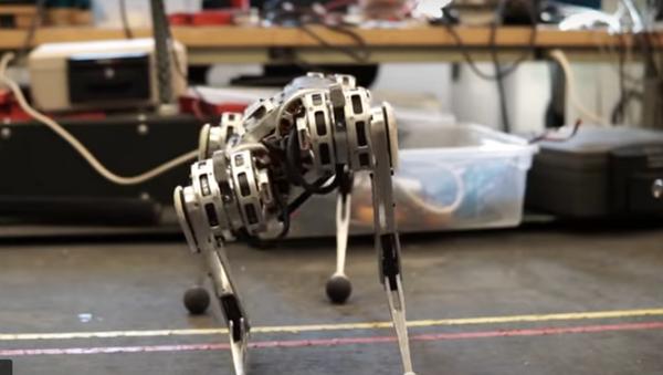 MIT's Four-Legged 'Mini Cheetah' Robot Climbs, Runs, Backflips - Sputnik Italia