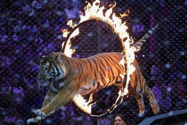 Più famoso tra i circhi russi è il Grande circo di Mosca, che si trova al centro della città ed è considerato come uno dei più grandi circhi non itineranti del mondo - Sputnik Italia