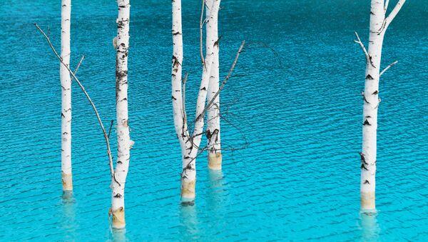Il lago artificiale vicino alla centrale elettrica di Novosibirsk in Russia attrae centinaia di turisti desiderosi di scattarsi un selfie sullo sfondo delle acque turchesi, che sembrano quelle delle Maldive. - Sputnik Italia