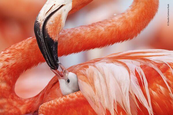La foto Beak to beak del fotografo messicano Caludio Contreras Koob - Sputnik Italia