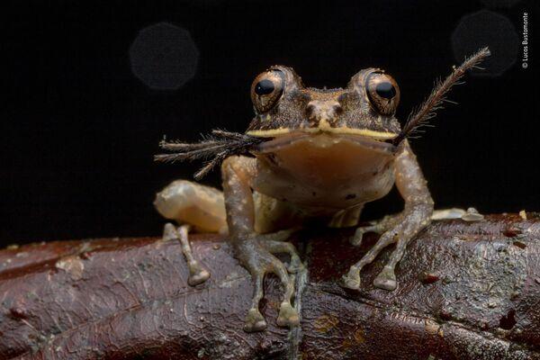 La foto Bon appétit del fotografo ecuadoriano Lucas Bustamante - Sputnik Italia