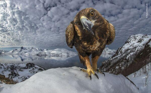 La foto del fotografo norvegese Audun Rikardsen - Sputnik Italia