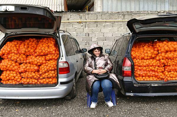 Vendita di mandarini al confine tra Russia e Abkhazia - Sputnik Italia