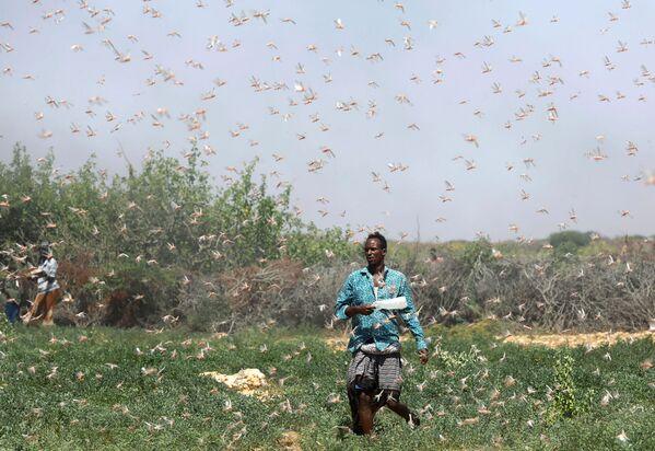 Un contadino somalo durante l'invasione delle locuste, Somalia, il 21 dicembre 2019 - Sputnik Italia