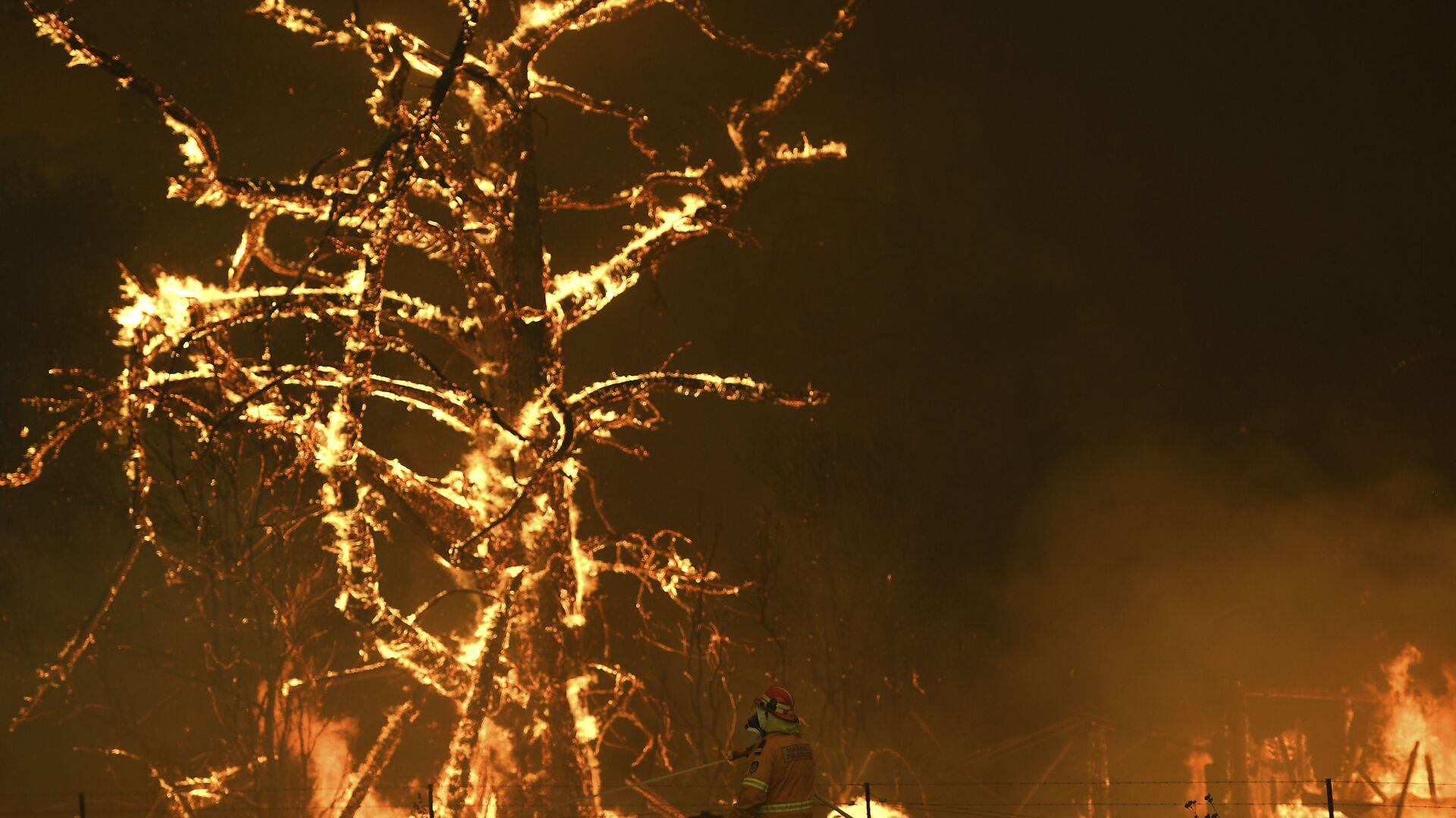 Gli incendi boschivi in Australia - Sputnik Italia, 1920, 02.07.2021