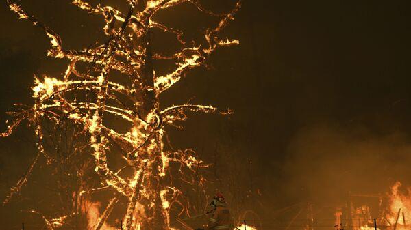 Gli incendi boschivi in Australia - Sputnik Italia