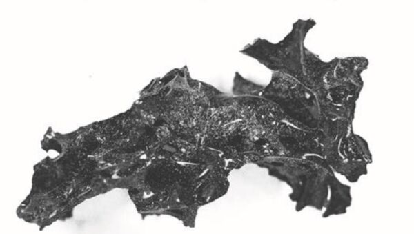 Il materiale vetroso nel cranio di una delle vittime dell'eruzione del Vesuvio - Sputnik Italia