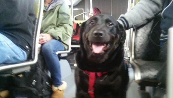 Questo cane prende l'autobus da solo per andare al parco - Sputnik Italia