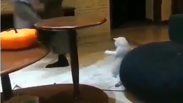 Un gatto che cerca di ballare fa ridere il web - Sputnik Italia
