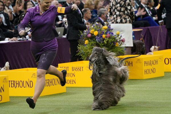 Un cane e la sua padrona alla gara dello show dei cani Westminster Kennel Club a New York. - Sputnik Italia