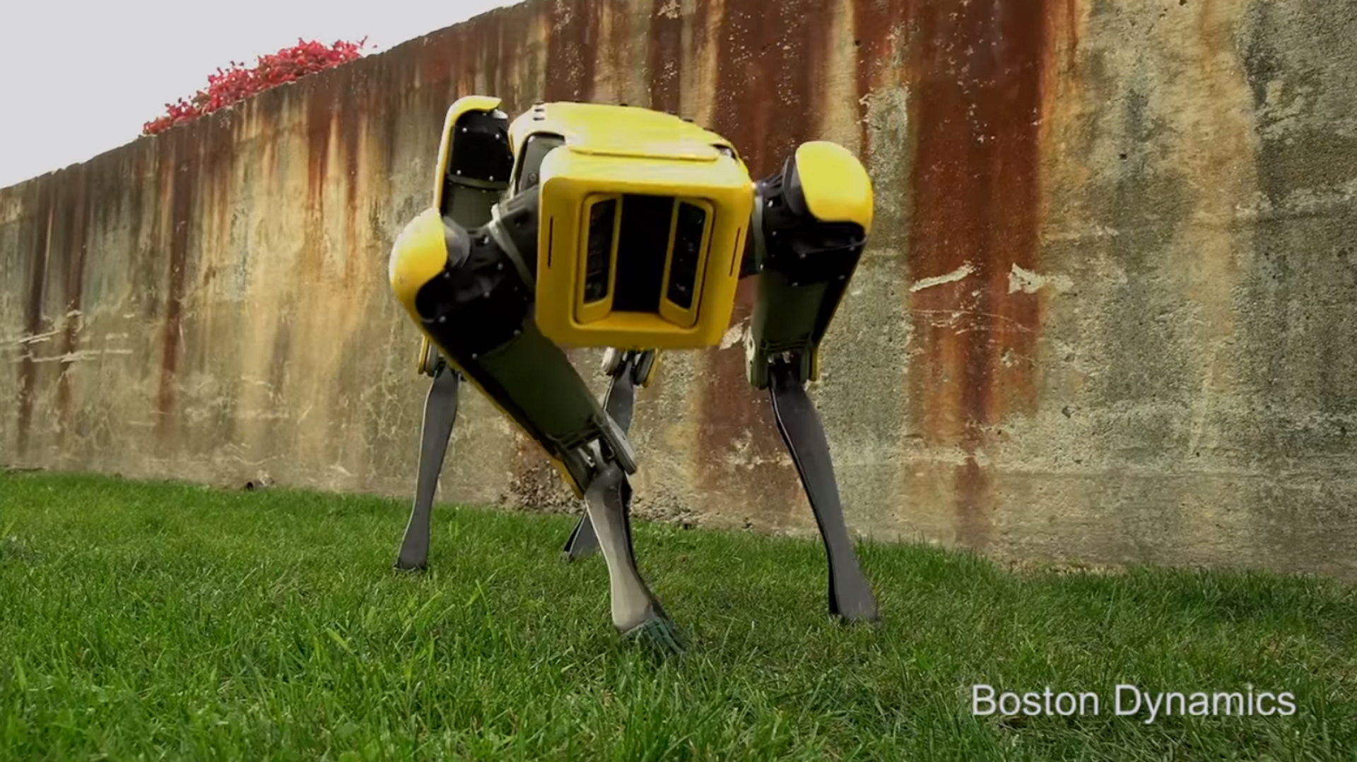 Il cane robot Spot - Sputnik Italia, 1920, 08.04.2021