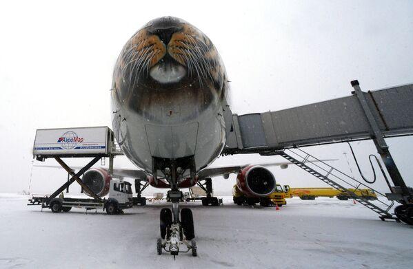 L'aereo della compagnia aerea Rossiya, che porterà il leopardo dell'Amur Leo 131M salvato a Mosca, all'aeroporto di Vladivostok. - Sputnik Italia