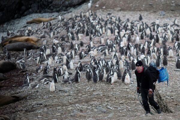 Lo scienziato raccoglie la spazzatura sull'isola di Snow, Antartide - Sputnik Italia