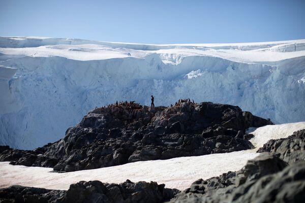 Steve Forrest, scienziato, conta il numero di pinguini Papua, l'isola di Anvers, Antartide, il 4 febbraio 2020 - Sputnik Italia