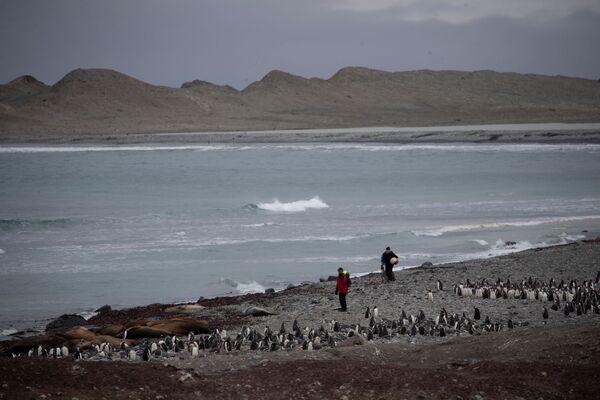 Lo scienziato raccoglie della spazzatura sull'isola di Snow, Antartide - Sputnik Italia