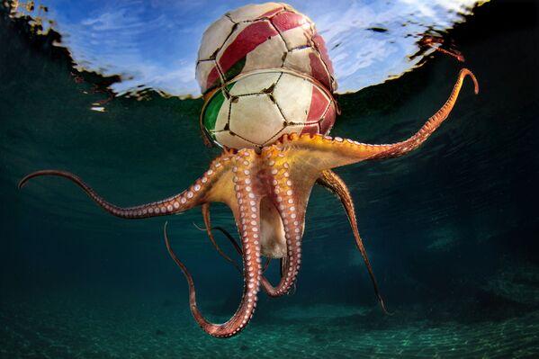 L'allenamento del polpo (Octopus Training) dal fotografo italiano Pasquale Vassallo. - Sputnik Italia