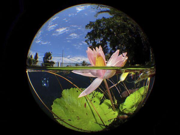 La foto Uluna Lily dal fotografo malese Manbd. - Sputnik Italia