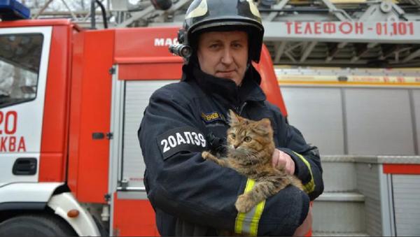 Pompiere con un gatto - Sputnik Italia
