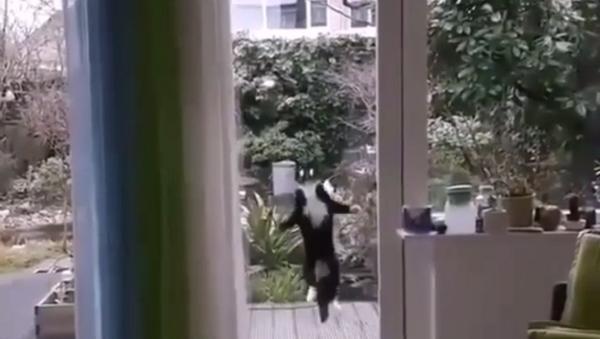Fatemi entrare! Gatto saltatore colpisce il web - Sputnik Italia