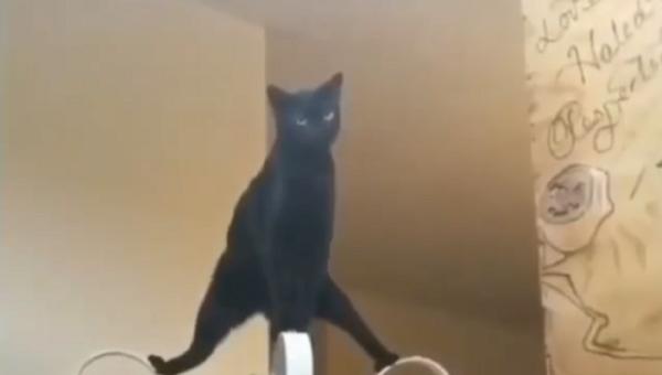Nei social utenti entusiasti di una gatta nera che emula Jean-Claude Van Damme - Sputnik Italia
