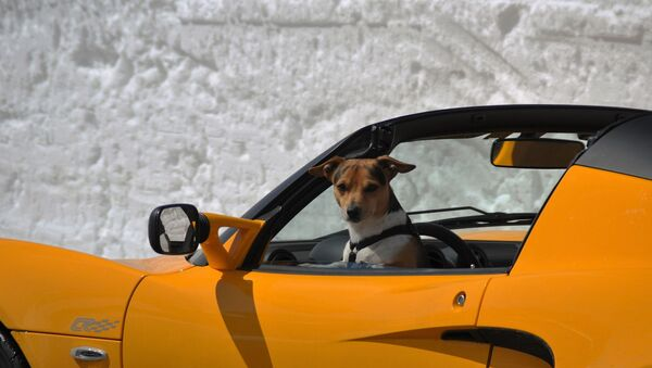 Un cane al volante - Sputnik Italia