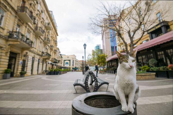 Un gatto sulla strada vuota di Baku - Sputnik Italia