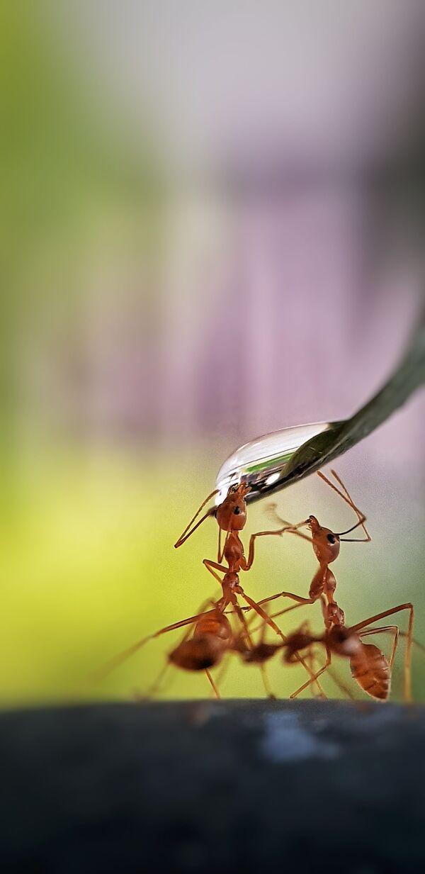 Lo scatto Thirsty ants (Formiche che hanno sete) del fotografo filippino divenuto il vincitore del concorso The World's Best Photos of #Water2020 - Sputnik Italia