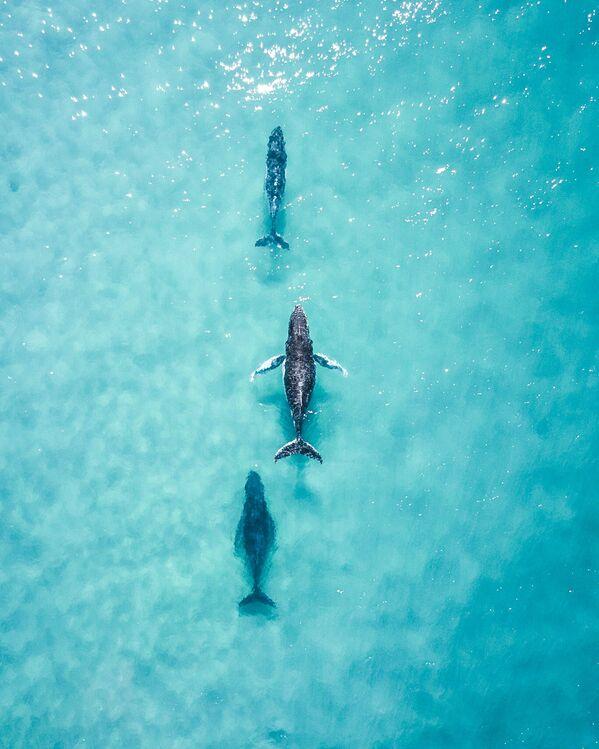 Lo scatto Spotting these 3 cruising up the coast made my day di un fotografo australiano al concorso The World's Best Photos of #Water2020. - Sputnik Italia