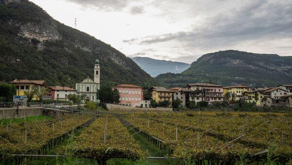Vigneti nel Veneto - Sputnik Italia