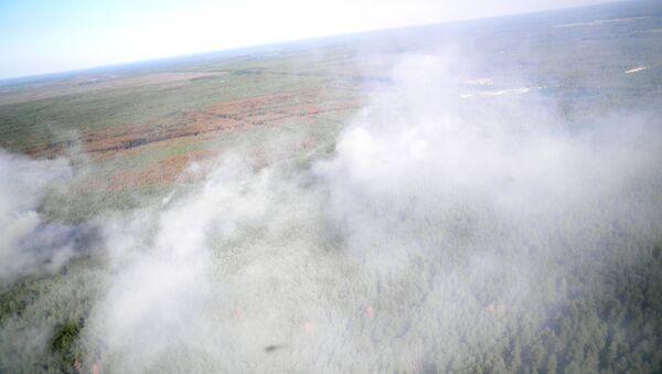 Incendio boschivo nella zona di alienazione di Chernobyl - Sputnik Italia