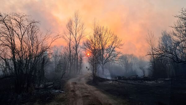 Лесной пожар в Чернобыльской зоне - Sputnik Italia
