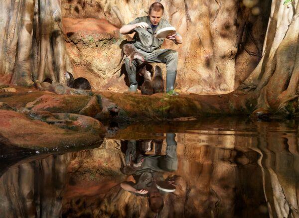 Un dipendente dell'acquario di San Pietroburgo dà da mangiare alle lontre dalla piccole unghie orientali. - Sputnik Italia