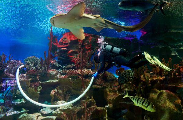 L'acquario di San Pietroburgo durante la pandemia di coronavirus. - Sputnik Italia